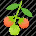 berries, berry fruit, buckthorn berries, sea buckthorn, yellow berries icon