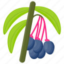 berries, berry fruit, blueberry, pink berries, saskatoon berries icon