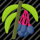 berries, berry fruit, blueberry, pink berries, saskatoon berries