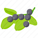 berries, berry fruit, blackberry, chokeberry, elderberry fruit icon