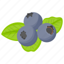 berry fruit, berry, berries, blueberry fruit, blueberry