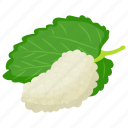 berries, berry, berry fruit, white berries, white mulberry icon