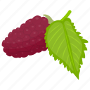 berries, berry, berry fruit, red berries, red mulberry icon