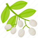 baneberries, berry fruit, doll's eyes, white baneberries, white berries icon