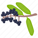 berries, berry fruit, blackberry, elderberry, elderberry fruit icon