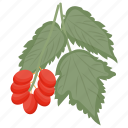 berries, berry, cranberry, cranberry fruit, cranberry juice icon