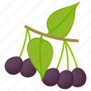 acai berry, acai fruit, berries, berry, organic acai icon
