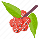 berries, berry fruit, organic pineberry, pine berry, white strawberry icon