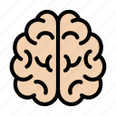 brain, creative, head, mind, organ