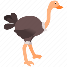 animal, bird, brown, gray, ostrich icon