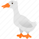 animal, bird, duck, gray, water, white icon