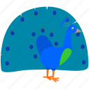 bird, blue, green, pavo real, peacock icon