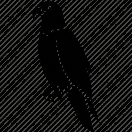 america, bald, eagle, falcon, hawk, raptor, usa icon