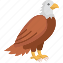 eagle, flat icons, bird, fly, nature icon