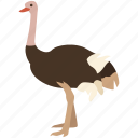 african, bird, farming, flightless, largest, ostrich, racing icon
