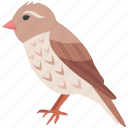 aviary, canary, chick, finch, robin, sparrow, wren icon