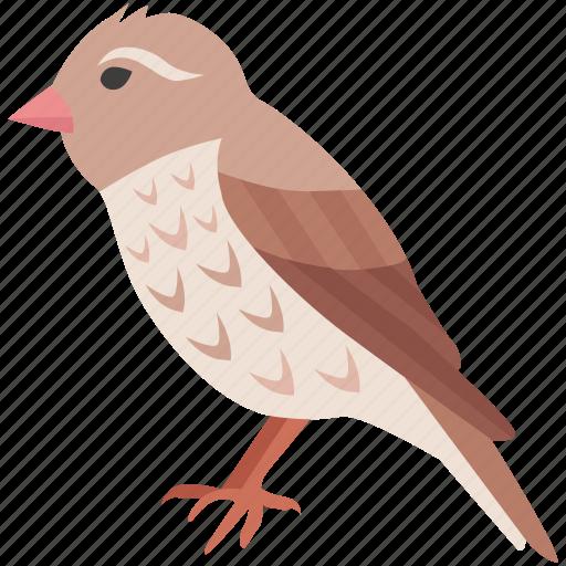 aviary, canary, chick, finch, robin, sparrow, wren icon