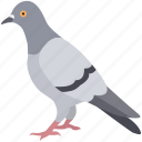 bird, dove, feral, pigeon, squab, street, urban icon