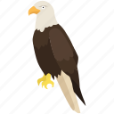 america, bald eagle, falcon, hawk, raptor, usa