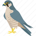 bird, duck, eagle, hawk, peregrine falcon, prey icon