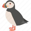 atlantic, bird, coastal, cute, pelagic, puffin, seabird icon