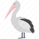 australian, bird, christian, coastal, pelican, water, white icon