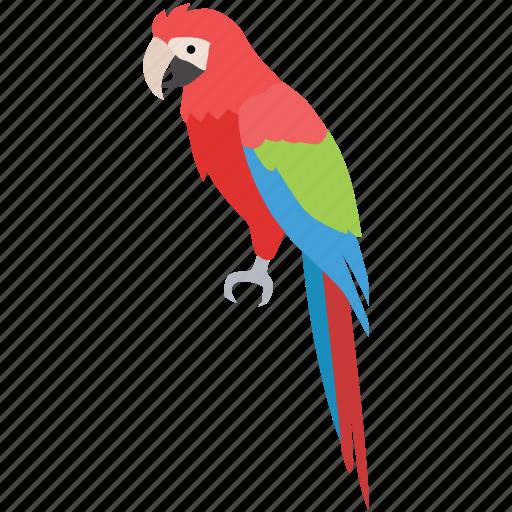 bird, colorful, lorikeet, macaw, parrot, pet, rosella icon