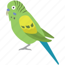 avian, aviary, bird, budgerigar, budgie, parakeet, pet icon