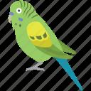 avian, aviary, bird, budgerigar, budgie, parakeet, pet icon