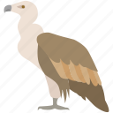 african, bird, carrion, condor, death, scavenger, vulture icon