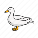 domestic goose, emdem goose, feather, goose, shelducks, waterfowl