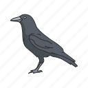 american crow, animal, bird, crow, raven, rook, wings icon
