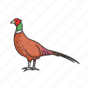 animal, beak, bird, game bird, pheasant, ring-necked pheasant icon