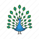 animal, bird, covert feather, indian peacock, pavo, peacock, peafowl