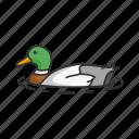 animal, aquatic bird, bird, dabbling duck, mallard, waterbird, waterfowl icon