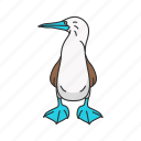 blue-footed booby, bird, marine bird, blue feet, booby, flipper bird, animal