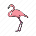 waterfowl, bird, wading bird, feather, flamingo, american flamingo, animal