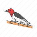 animal, beak, bird, feather, passerine bird, sapsucker, wryneck icon