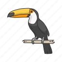 toucan, bird, giant toucan, passerine bird, toco toucan, animal