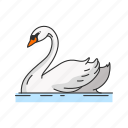 waterfowl, bird, webbed feet, domestic duck, duck, animal, bill icon
