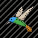 animal, beating wing, bird, feather, flying bird, hummingbird, territorial icon