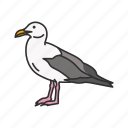 animal, bird, gull, sea bird, sea gull, seagull, webbed feet icon