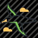 albatross, bird, flying, wildlife