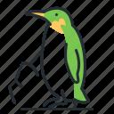 antarctic, bird, penguin, wildlife