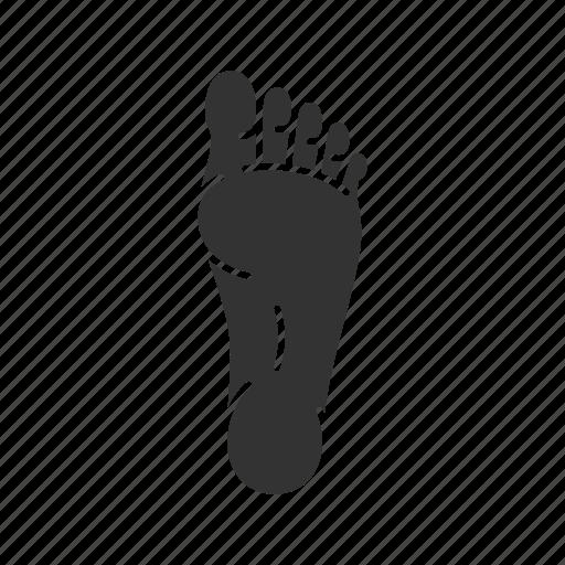 Body part, foot, footprint, human, leg, limb, toe icon - Download on Iconfinder