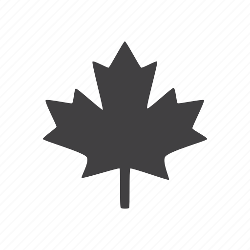 canada, leaf, maple icon