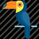 animal, bird, brazil, nature, parrot, tropical, wildlife