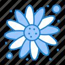 carnival, flower, sun