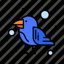 bird, carnival, parrot, wild