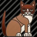 birman, breed, burma, cat, sacred